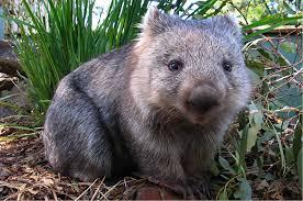 imagenes animales australia 5 animales únicos en australia conoce la fauna australiana