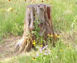 what s the difference between a tree base and a stump quora