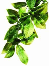 amazon com exo terra plastic terrarium plant small mandarin