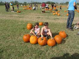 dewberry farm pumpkin patch and christmas tree farm money saving