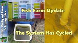 backyard aquaculture fish farm update the system has cycled