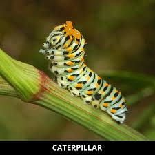 butterfly facts cool kid facts