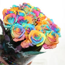Wholesale Roses Wholesale Rose Directory Rainbow Roses Happy Roses Wholesale