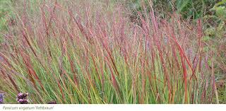 gardening features from crocus co uk late ornamental grasses