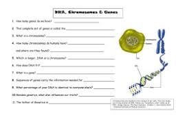 tour of the basics web quest log on to http gslc genetics utah edu