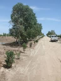 Bauland Bauland Hergla Tunesien 187 352 Dt
