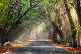 background photography abstract background of route and journey amidst the big tree