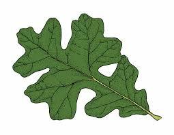 post oak mdc discover nature