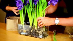 create a bulb garden using a clear rectangle vase youtube