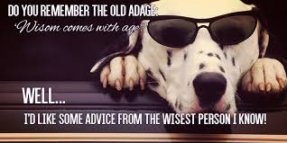 Advice Dog Memes - funny birthday meme