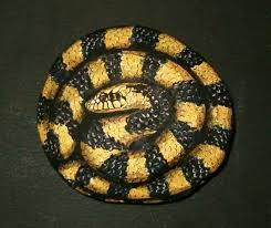 Found A Snake In My Backyard 279 Best Pebbles And Stones Snakes Images On Pinterest Snakes