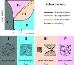 force percolation of contractile active gels soft matter rsc