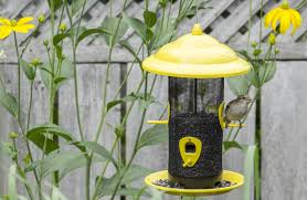 feed your backyard birds in the fall and winter residential