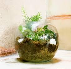 house plants decoration ideas home design ideas