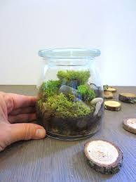 indoor moss garden terrarium image information