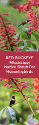 native plant species 34 best mississippi native plants images on pinterest native