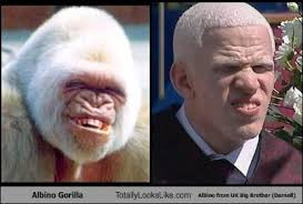 Albino Meme - albino gorilla totally looks like albino from uk big brother