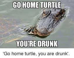 Turtle Memes - go home turtl youre drunk go home turtle you are drunk meme on
