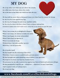 boxer dog sayings my boy is not a dauchshund but this applies to all dogs