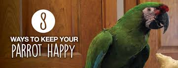 vital l full spectrum light for birds 8 ways to keep your parrot happy