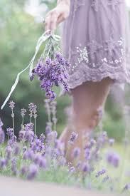 Girls Favourite Flowers - best 25 lavender flowers ideas on pinterest lavender garden