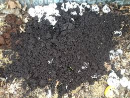 ground egg shells planting the garden why coffee grounds and egg shells are a