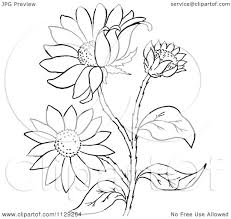 cartoon clipart of an outlined black eyed susan flower plant