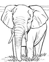 african elephant coloring netart