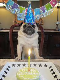 Happy Birthday Pug Meme - it s just peachy s birthday page 13 the dawg shed