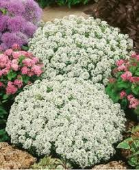 Fragrant Flowers For Garden - the best fragrant flowers for your garden lavender and window