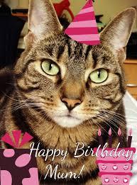athena cat goddess wise kitty happy birthday mum caturdayart