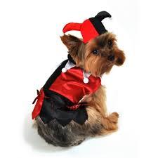 Jester Halloween Costume Mardi Gras Jester Dog Costume Houndabout