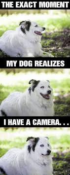 That Moment When Meme - the exact moment when dog meme