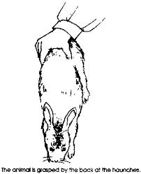rabbit husbandry health production