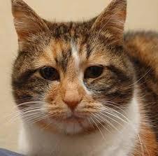 Cat Under Faucet Kidney Disease In Cats