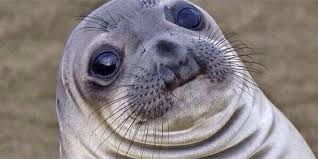 Awkward Seal Meme - awkward moment seal wants to help you express your profound shame