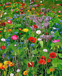stunning low budget container gardens wild flowers flower and easy