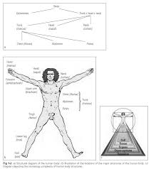 Human Anatomy Planes Of The Body Anatomical Nomenclature For Direction And Position Dental