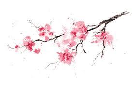 cherry tree stock photos royalty free images vectors