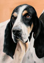 bluetick coonhound gascon gascon saintongeois gascão saintongeois puppy dog french hound