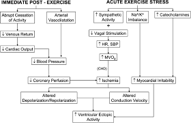 exercise and acute cardiovascular events circulation