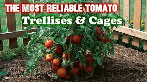 the most reliable tomato trellis u0026 cages gardening tips youtube