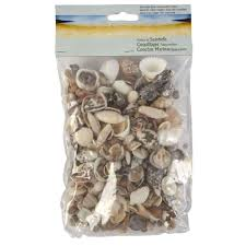 natural seashell assortment