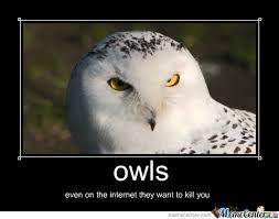 Art Owl Meme - funny owls meme center picture owls doin owl stuff pinterest