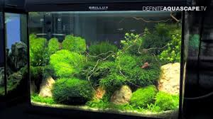 Aquarium Aquascapes Aquascaping Best Planted Aquariums Of Petfair 2011 Part 1 Youtube