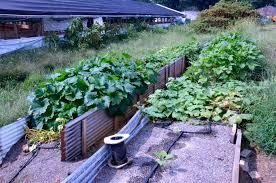 vegetable farmer upcycles u0026 transforms a tyson chicken farm by