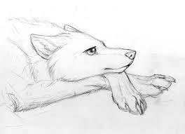 wolf character sketch by jianre m on deviantart