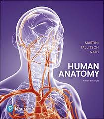 Human Physiology And Anatomy Pdf Human Anatomy 9th Edition 9780134320762 Medicine U0026 Health