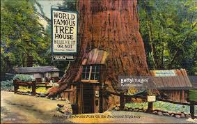 famous tree houses world famous tree house