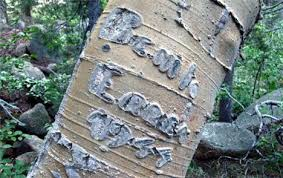 initials carved in tree archeologists study the world s oldest tree carvings treehugger